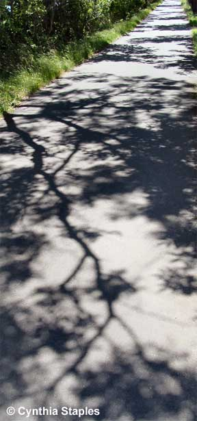 Path Shadows - Photo © Cynthia Staples