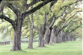 Trees have experienced many summer seasons.